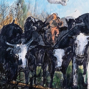 Stay-Home-Cows
